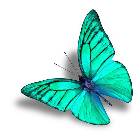白い背景の上の下にソフト シャドウと美しい飛行緑蝶 写真素材