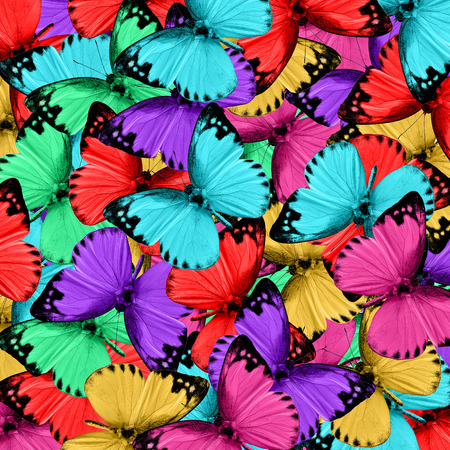 wing span: Exotic colorful background made of Lesser Albatross butterflies in various fancy colors