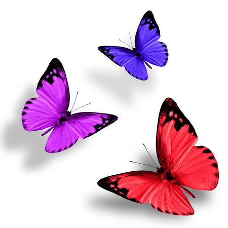 wing span: Beautiful flying red purple and blue butterfly on white background with nice soft shadow Stock Photo
