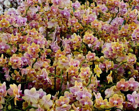 compilation: Mix of Pink beautiful Orchids compilation in nice background texture