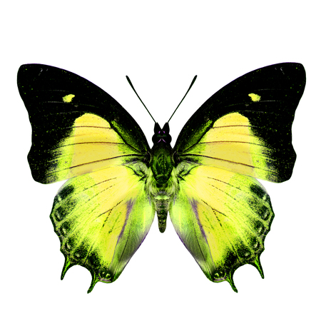 yellow butterfly: Exotic Yellow Butterfly in fancy color isolated on white background