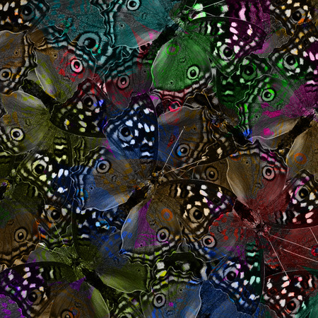 exotic butterflies: Exotic background texture with many spots made of Grey Pansy Butterflies