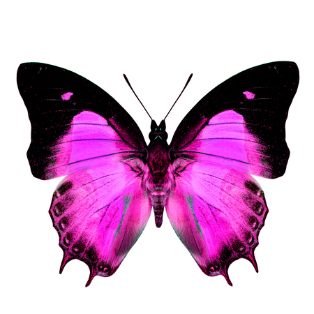 pink butterfly: Exotic Pink Butterfly in fancy color isolated on white background