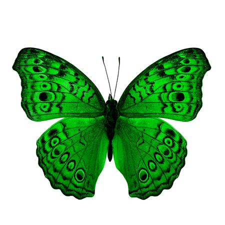 green butterfly: The Beautiful Green Butterfly back wing profile in fancy color isolated on white background Stock Photo