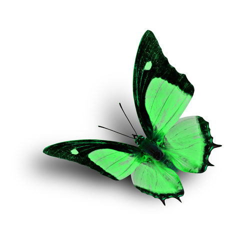 green butterfly: Flying Indian Nawab butterfly in fancy green color profile on white background with soft shadow beneath Stock Photo