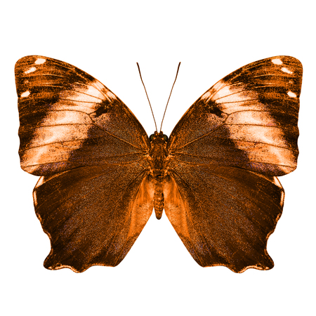wing span: The beautiful orange butterfly isolated on white background