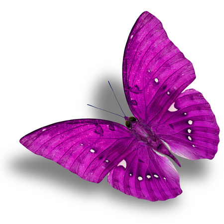 pink butterfly: Beautiful Flying Pink Butterfly (Great Marquis) with nice shadow beneath isolated on white background