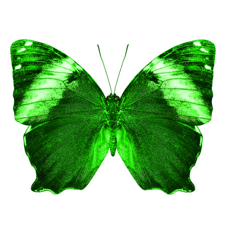 green butterfly: The beautiful green butterfly isolated on white background Stock Photo