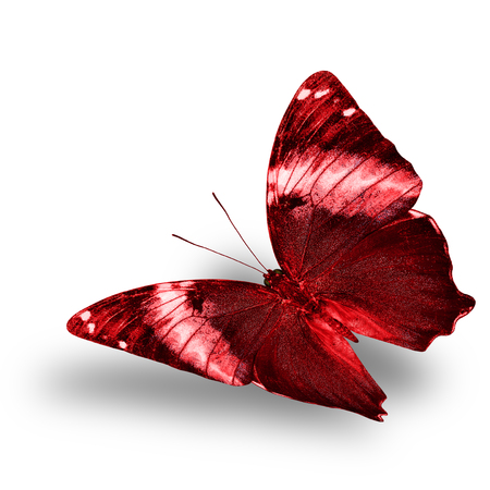 wing span: Beautiful flying red butterfly with nice soft shadow on white background