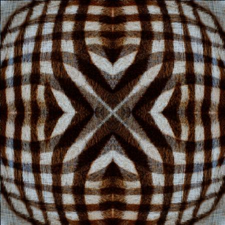 super cross: Lo mejor de la trama de fondo de Super Cross camuflaje de cebra textura de la piel Foto de archivo