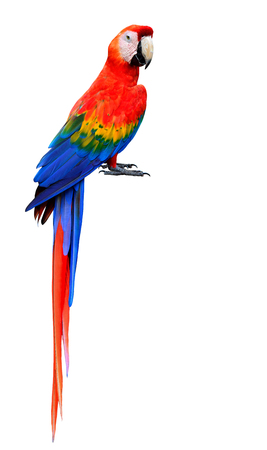 Beautiful Scarlet Macaw Bird with bare feet isolated on white background