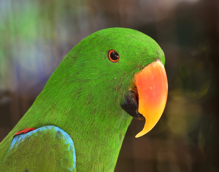 green parrot: Close up of Green Parrot bird with very sharp in details Stock Photo