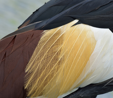 bird feathers: Multicolor of Crown Crane Bird Feathers in close up