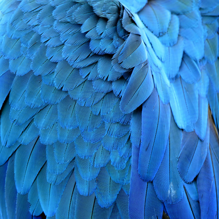 The Great of Close up of Blue and Gold Macaw bird feathers with details Standard-Bild