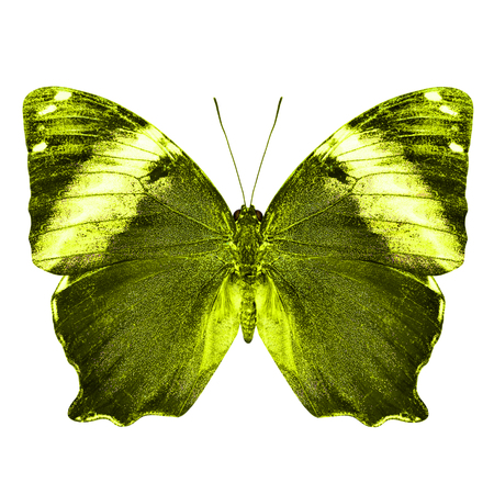 yellow butterfly: The beautiful yellow butterfly isolated on white background