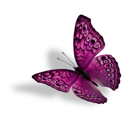 pink butterfly: The beautiful flying pink butterfly (Junonia atlites ) isolated on white background with soft shadow beneath