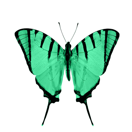 green butterfly: Sweet green butterfly in fancy color profile isolated on white background