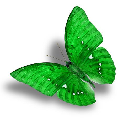 mariposa verde: Hermosa Flying Butterfly Green (Gran Marquis) con buena sombra bajo aislado sobre fondo blanco Foto de archivo