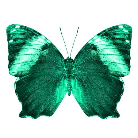 mariposa verde: La hermosa mariposa verde de luz aislados sobre fondo blanco Foto de archivo