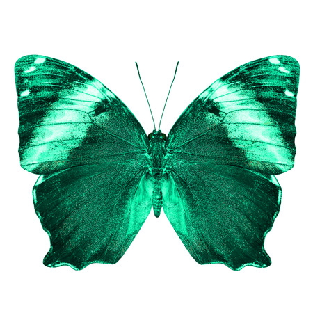 nymphalidae: The beautiful light green butterfly isolated on white background Stock Photo