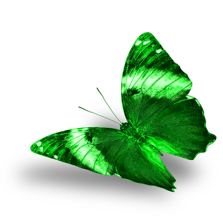 wing span: Beautiful flying green butterfly with nice soft shadow on white background Stock Photo