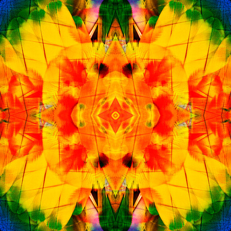 architech: Yellow and Red Background texture of scarlet macaw bird feathers