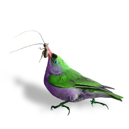 nice stay: beautiful green bird showing cockroach meal in his mouth isolated on white background