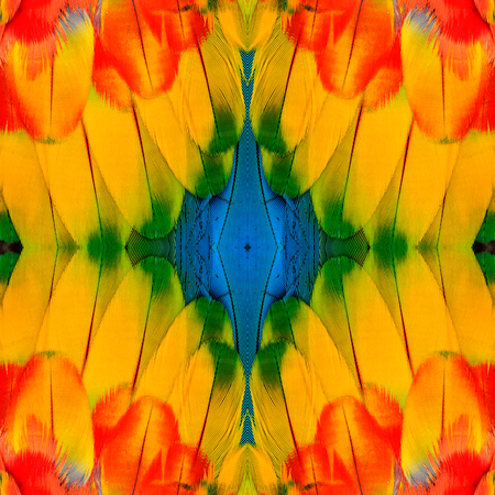 architech: Exotic yellow background texture with blue spot in center taken from Scarlet Macaw feathers