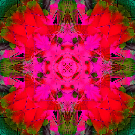 architech: Beautiful pink and red background texture made of scarlet macaw bird feathers
