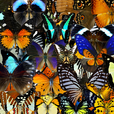 livery: Exotic colorful background texture made of compilation butterflies in the greatest set of beautiful livery Stock Photo