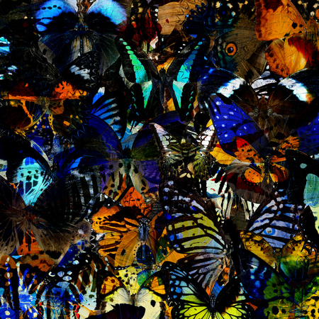 livery: An Exotic colorful background texture made of many butterflies in the greatest set of beautiful livery Stock Photo