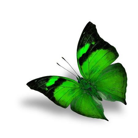 green butterfly: The beautiful flying green butterfly on white background wiith shadow beneath