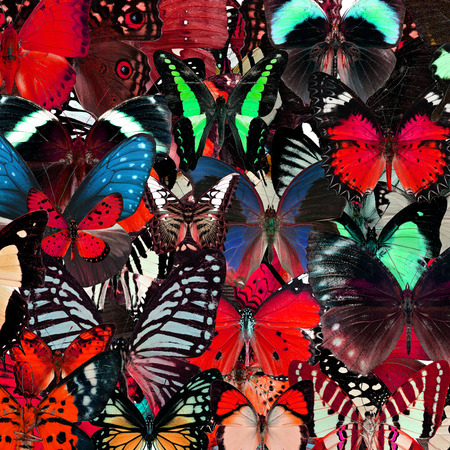 compilation: Exotic red background texture by the compilation of many butterflies in the greatest set of beautiful livery