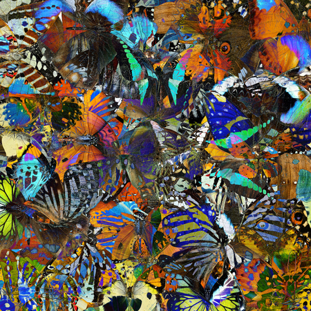 exotic butterflies: An exotic colorful background texture made of different butterflies in the greatest set of beautiful livery