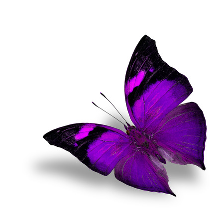 The beautiful flying purple butterfly on white background wiith shadow beneath