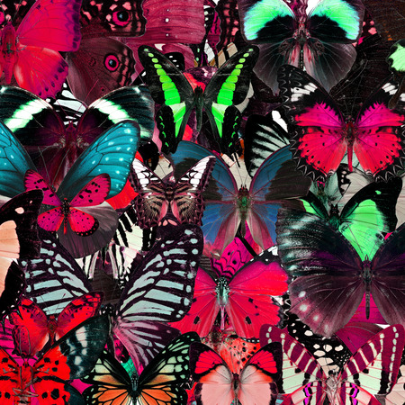 livery: Exotic pink background texture by the compilation of butterflies in the greatest set of beautiful livery