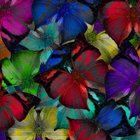 exotic butterflies: Exotic colorful background texture made of fancy Autumn leaf butterflies in the beautiful livery Stock Photo