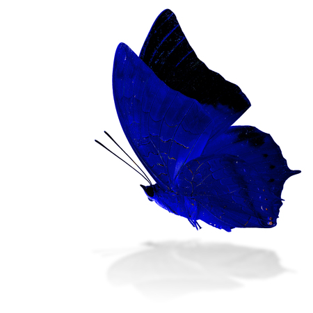 tawny: Beautiful flying blue butterfly, the Scarce Tawny Rajah in fancy color profile on white background with grey shadow reflection