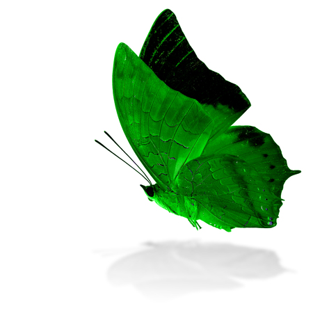 rajah: Beautiful flying green butterfly, the Scarce Tawny Rajah in fancy color profile on white background with grey shadow reflection