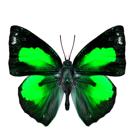 green butterfly: The beautiful green butterfly isolated on white background, Sunbeam butterfly in fancy color profile