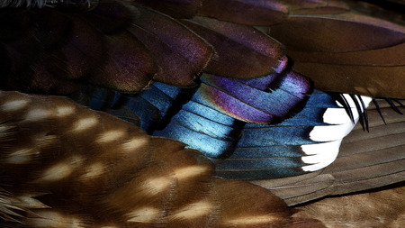 aix galericulata: Brown purple and blue background of Mandarin duck (aix galericulata) feathers, fantastic nature texture Stock Photo
