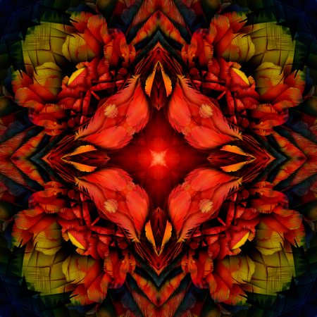 ararauna: Exotic colorful background made from Scarlet Macaw parrot feathers, beautiful texture look like roses Stock Photo