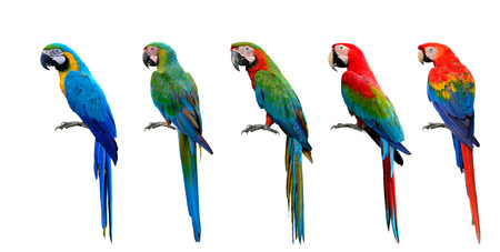 Beautiful set of macaw parrot birds compilation, Scarlet, Green-winged, Harlequin, Buffon and Blue and Gold, exotic parrots collection Stock Photo
