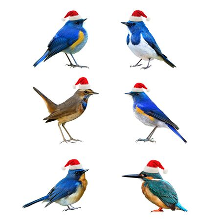 Beautiful Birds wearing Santa Claus red hat in Christmas season greeting,  happy birdsl isolated on white background Stock Photo