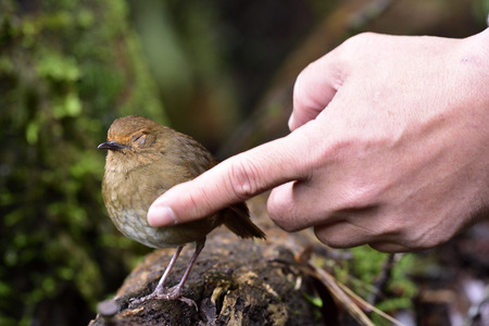 trusted: Brown bird feeling love with touching of trusted human hand on her feathers