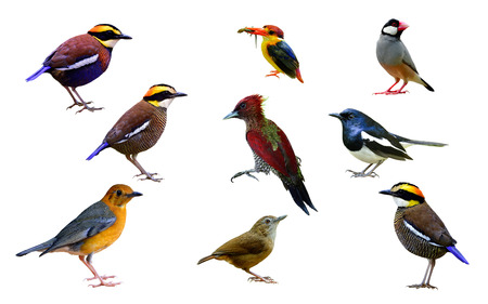 Beautiful set of exotic birds isolated on white background collection for commercial and nature advertisement, fascinated nature