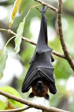 Mystery holloween animale da incubo con gli occhi aperti mentre pende dal ramo verde, fantasma vampiro di giorno