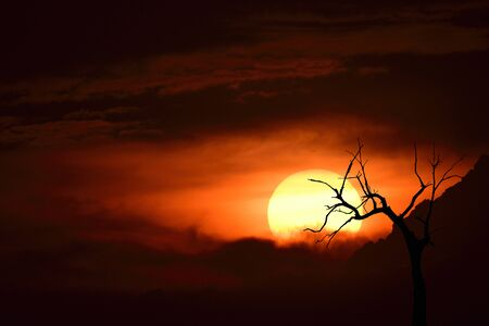 Beautiful sunset with bright red sun thick cloud and black silhouette of dead tree, darkness landscape