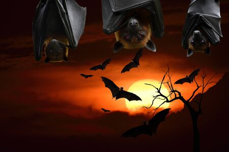 scary bat heads hanging down from roof in halloween night horror over darkness of sunset