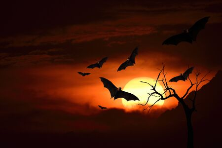 Horror in Halloween night with flying bats and tree silhouette, dark evening Stockfoto